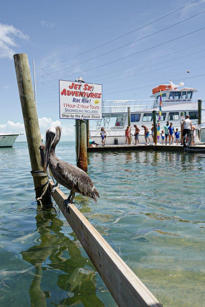 2 jours dans Key West et les Keys : bonnes adresses, que voir, que faire ?