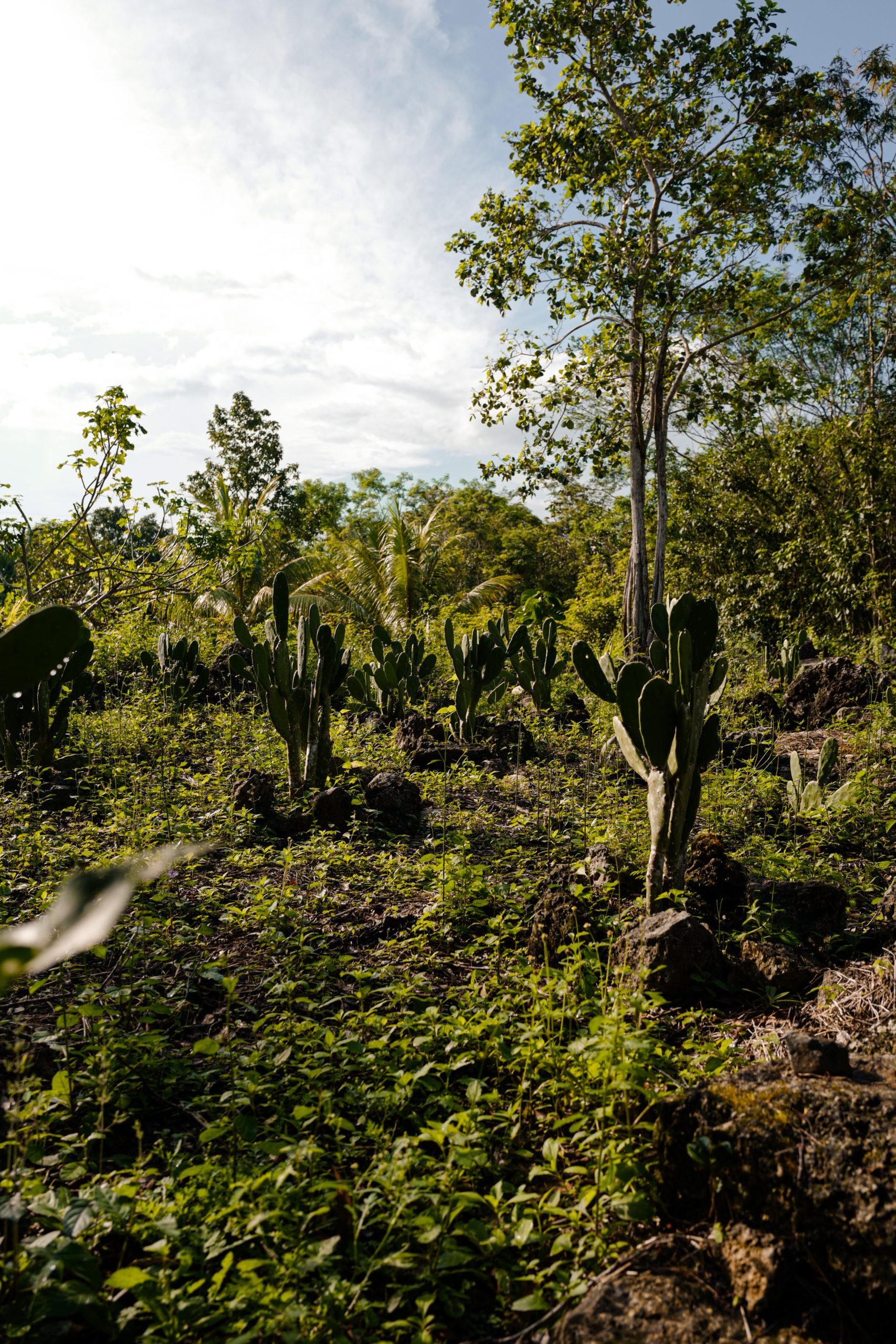 cactus-mexique