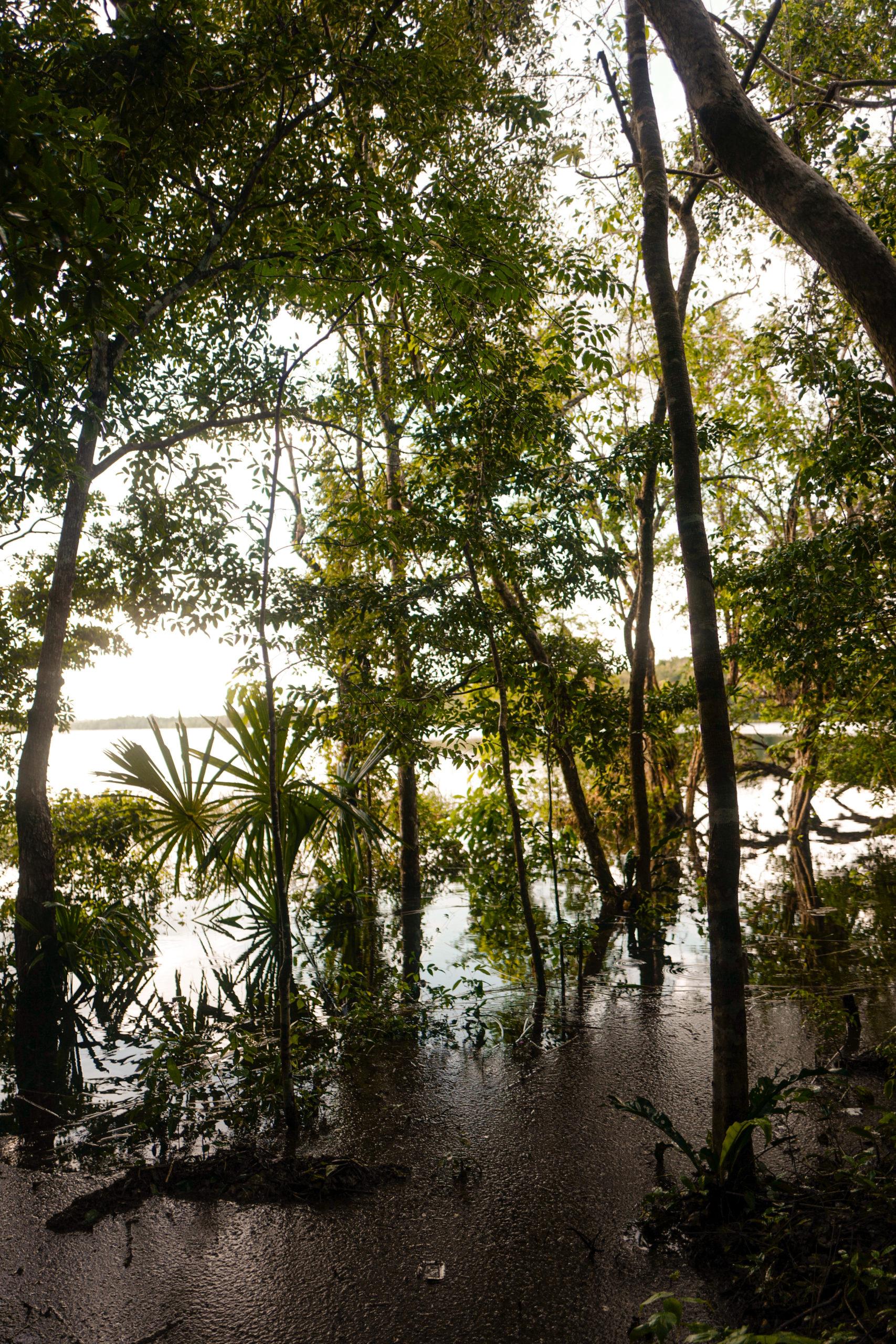 mangrove-mexique