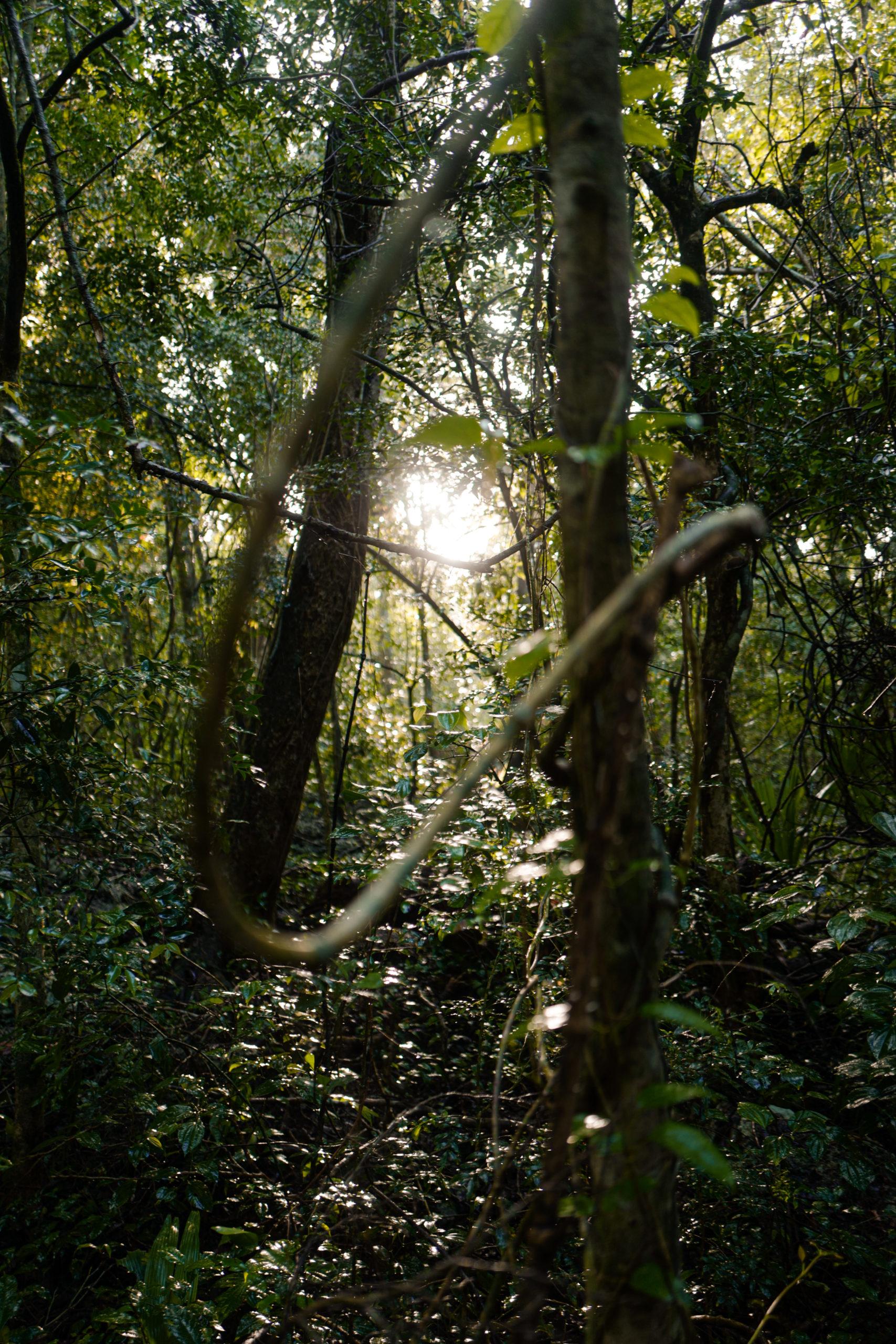 nature-mexique